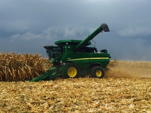 Duane harvesting corn ahead of the rain