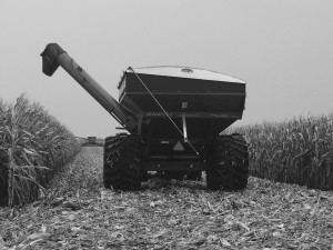 Leonard following the combine through the field.