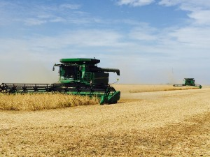 Dennis and Duane harvesting seed beans in Christian County
