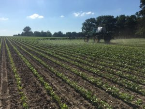 Spraying beans in Christian County.  Environmental conditions have been excellent for weed growth!