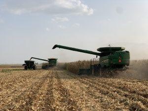Harvesting corn in Macon County